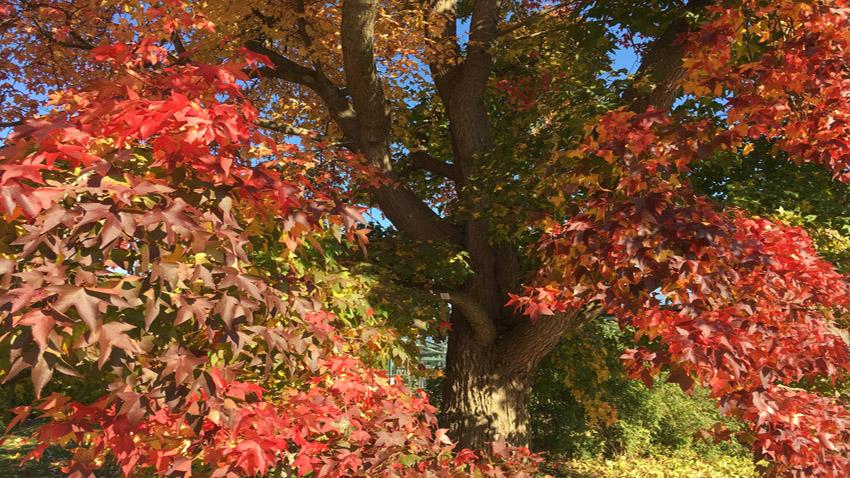 Goldener Herbst – wie wäre es mit einem Waldbad, um den Kopf frei zu bekommen?